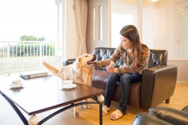 愛犬と泊まれる部屋も人気