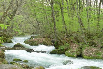 十和田八幡平国立公園 提供:環境省