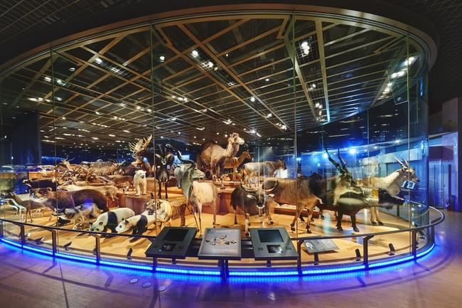 ツアーを実施する地球館3階「大地を駆ける生命」の展示