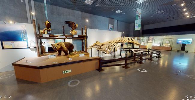 展示3Dビュー(©VR革新機構 提供:国立科学博物館)