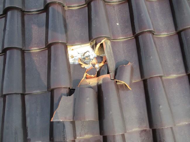 習志野隕石2号が当たって割れた屋根瓦(写真:発見者)
