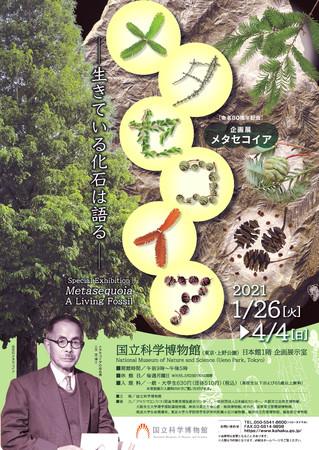 「メタセコイア ー生きている化石は語る」ポスター