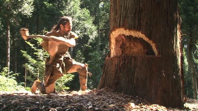 丸木舟は石斧で杉の木を伐り出した