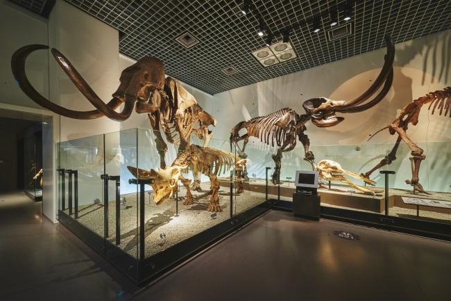 国立科学博物館 地球館地下2階展示室(1)