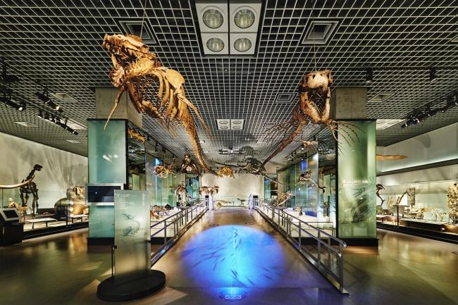 国立科学博物館 地球館地下2階展示室(2)
