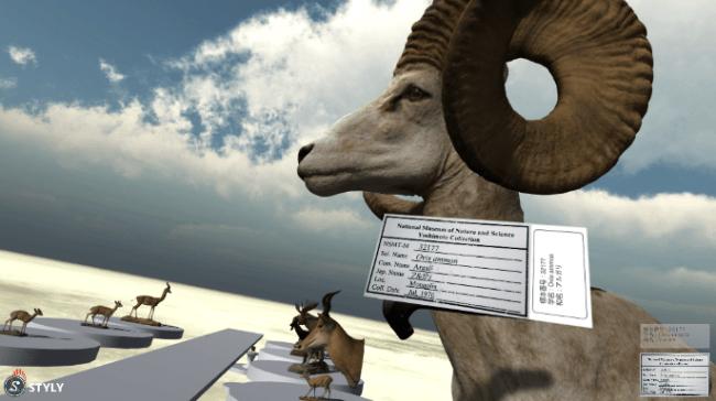 VRゴーグルで見たアルガリの剥製のイメージ。近づいてみると標本ラベルが表示されます。   (国立科学博物館)