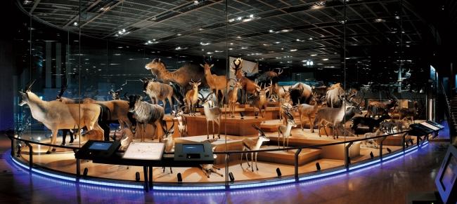 国立科学博物館 地球館3階展示室「大地を駆ける生命」