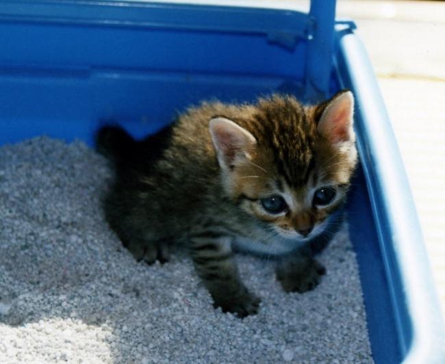 猫砂からのニオイ対策に