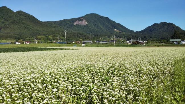 そば畑 古き良き日本の原風景が広がる絶好のカメラスポット