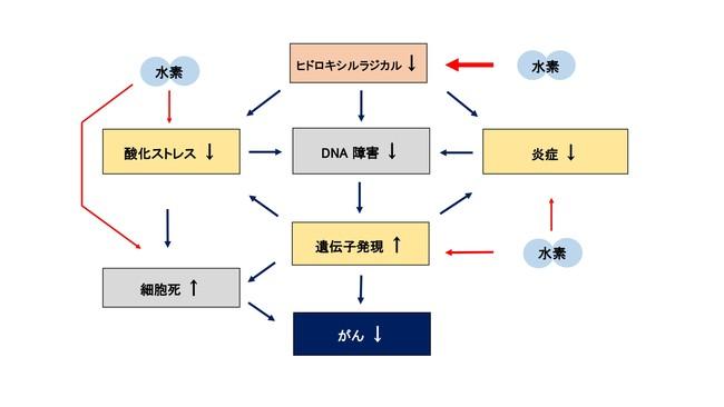 図1 水素が抗がん作用を示すメカニズムの可能性