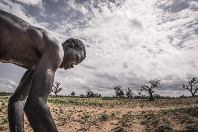 アフリカのマリで苗を植える農夫。西アフリカでは2100年までに平均気温が3.3℃上昇すると予測されていて、漁業や農業、牧畜業への影響が懸念される  (C)ICRC/TURPIN, Samuel