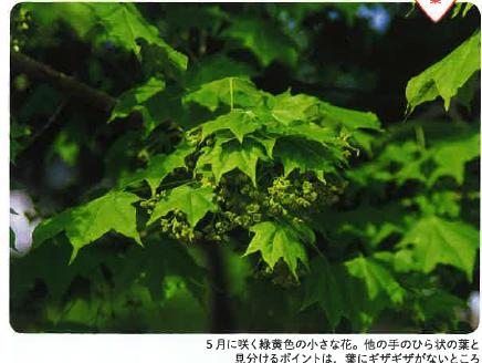 【写真4.】トペニ