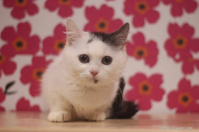かわいい猫ちゃんたちがお出迎え