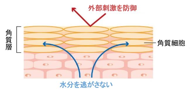 図1.肌のバリア機能
