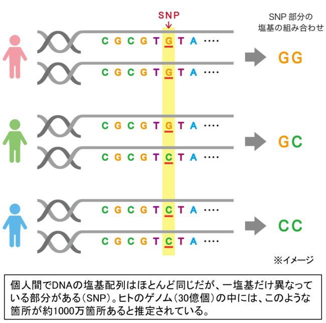 図1 SNPについて
