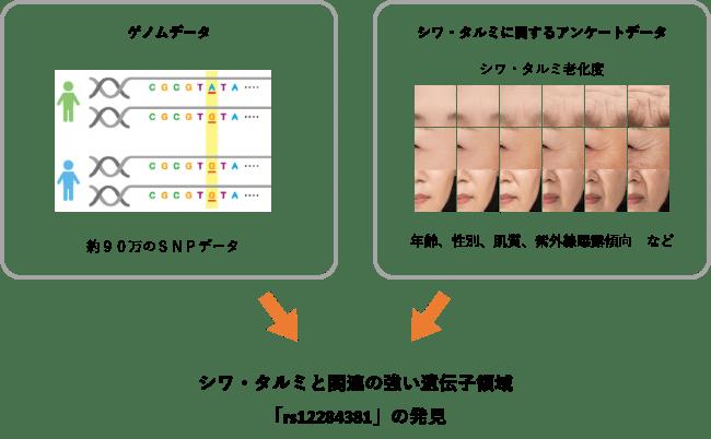 シワ・タルミと関連する遺伝子領域「rs12284381」