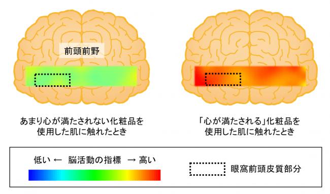 スキンケア化粧品使用後の脳活動