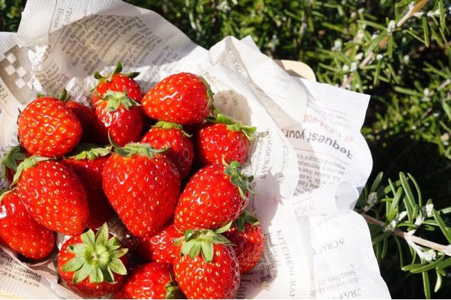 契約農家から直送された様々な種類の苺をふんだんに使用しています