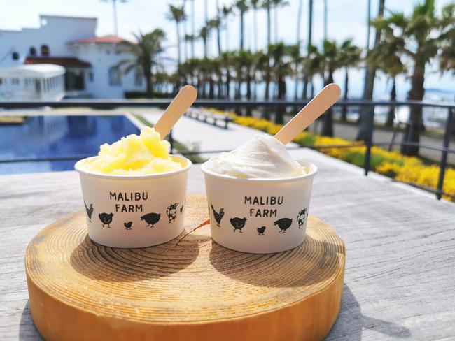 石垣島産パッションフルーツ&北海道産ミルクのジェラート
