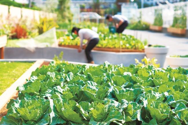 循環型有機農法による自社菜園