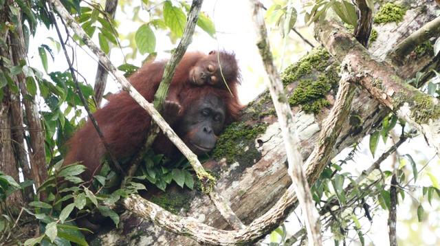 生物多様性の宝庫ボルネオで植林・育林による森林再生のしくみをつくる。豊かな熱帯雨林を未来につなぎたい