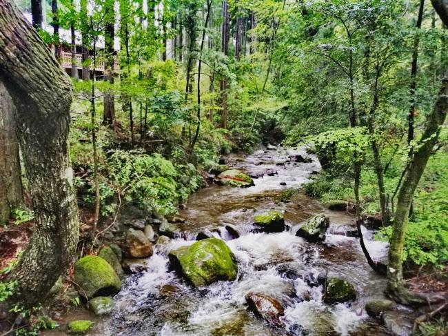 RECAMPおだわら内に流れる川。各キャンプ場ごとに様々な景色をお楽しみいただけます