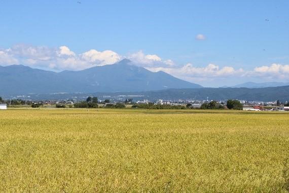 田園風景(コシヒカリ)