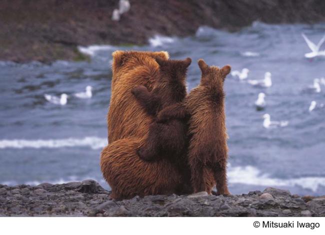 """2021年オリンパス Wwfカレンダー Alaskan Summer Ťã®ã'¢ãƒ©ã'¹ã'« Å°ã•ãªã""""のちの大きな時間 ªリンパス株式会社のプレスリリース"""