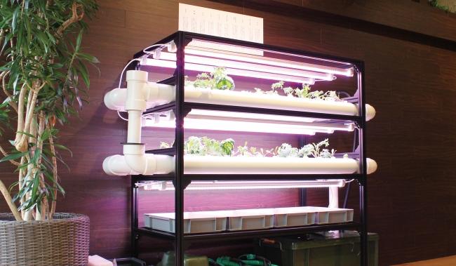 """名古屋オフィスに設置した""""植物プラント"""""""