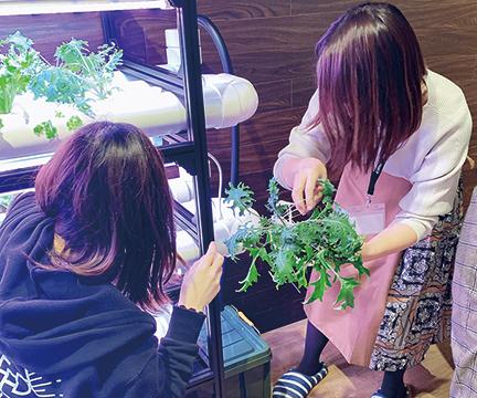 食べごろの野菜を、みんなで楽しく収穫
