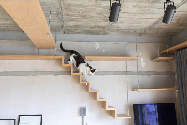 猫との暮らしを実現した「リノベる。」のリノベーション事例