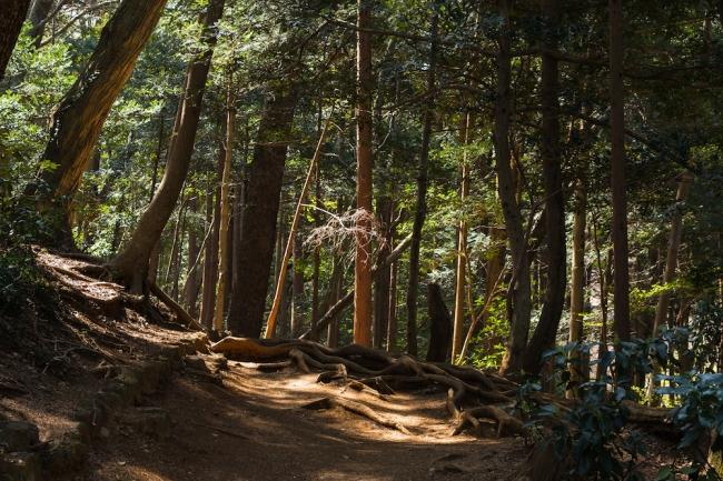 高尾山には約1,600種の植物の種類が確認されており、これはイギリス全土で自生する種類とほぼ同数といわれている