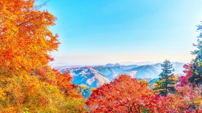観光地として知られているが、高尾山域の奥行きはとても深く、様々なトレッキングが楽しめる