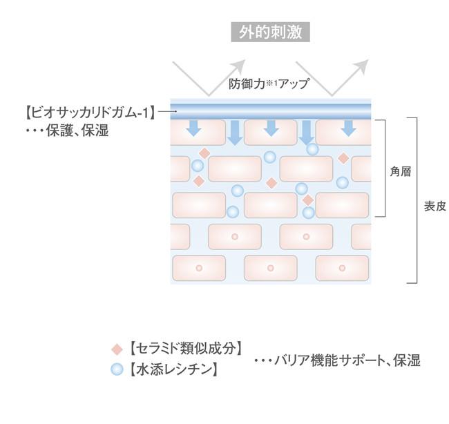 潤い保護膜イラスト図解