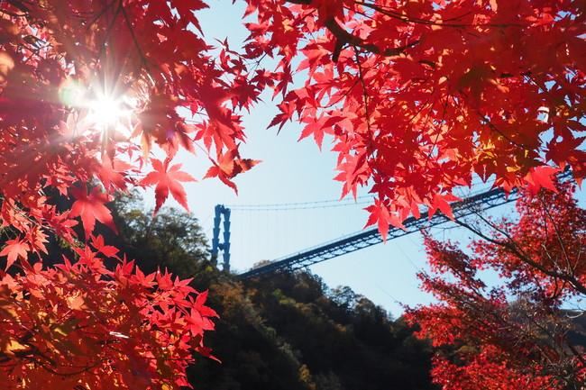 竜神大吊橋と紅葉1.
