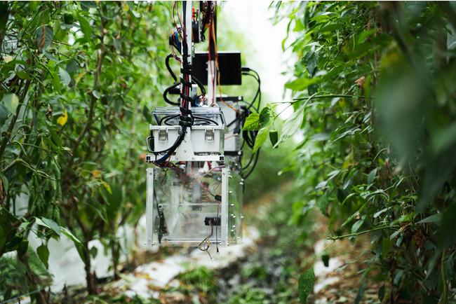 農場を移動する自動収穫ロボット「L」、非接触型でコロナ対策にも