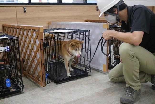 動物避難所開設訓練の様子