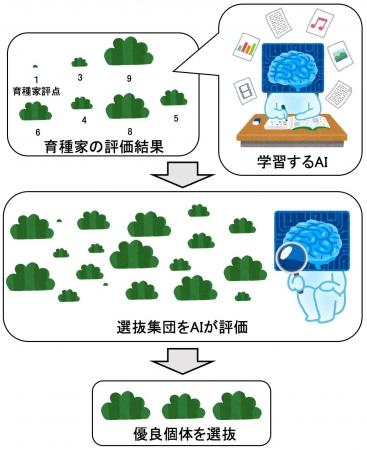 AIによる優良個体選抜の概念図:農研機構提供