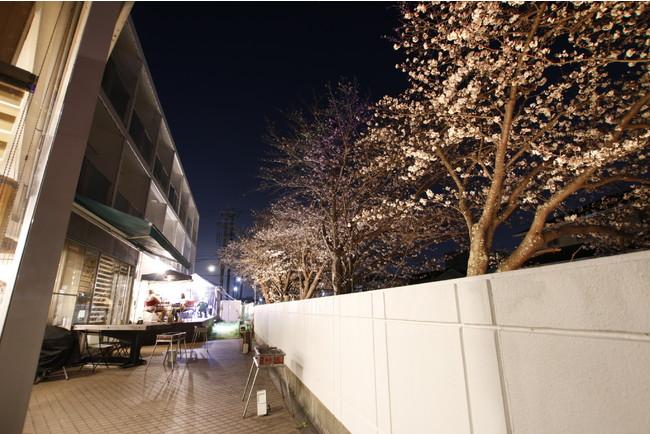 桜の色が協調されるシンプルなものもあります。