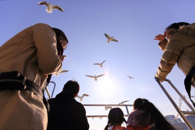 シベリアから越冬にやったきたユリカモメとコンタクト。