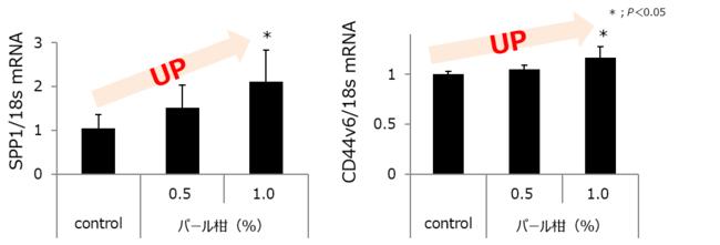 図1:パール柑エキスの「細胞遊走性」関連因子活性効果