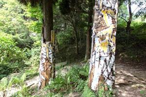 2016年の公募大賞「グランプリ」作品 川田知志《六甲高山森林内壁画》