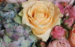 アジサイとバラのアレンジセミナー(完成イメージ)