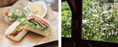 (左)ピクニックランチセット サラダ プチデザート ドリンク付 1,200円 (税込) (右)窓越しのオオデマリ 満開時の様子