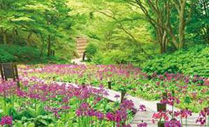 六甲山高山植物園