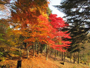 園内の紅葉