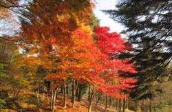 園内の紅葉(10月中旬)