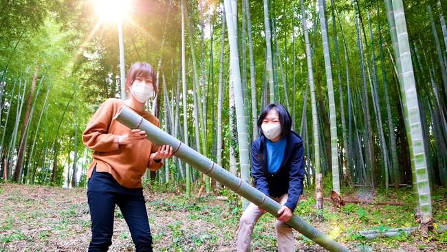 竹林での活動イメージ