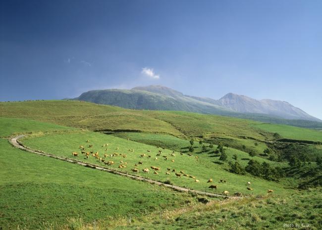 阿蘇GOODGOODのHOME牧場 放牧飼育風景