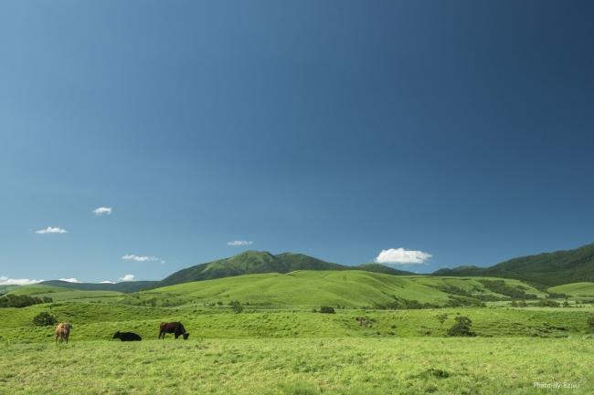 阿蘇GOODGOODのHOME牧場の牧草和牛